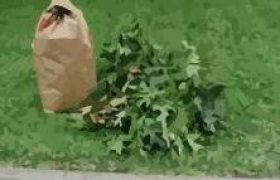 Curbside Yard Trimming Collections